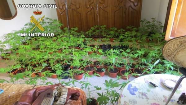 Detenida una pareja en Alcaudete acusada de cultivar marihuana en una vivienda deshabitada