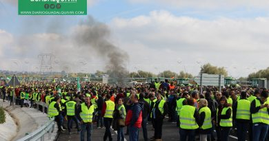 El sector olivarero anuncia para marzo una marcha a Madrid para protestar por los bajos precios del aceite