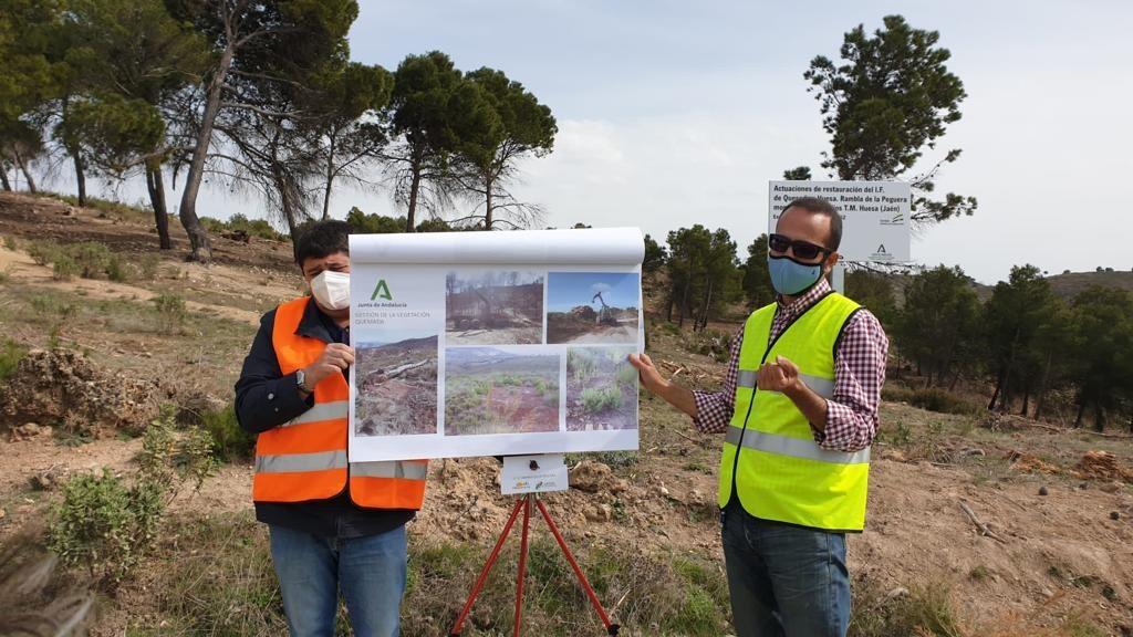 Desarrollo Sostenible restaura 184 hectáreas de la zona del incendio de Quesada y Huesa