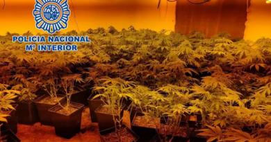 Tres detenidos en Linares tres cultivos de 800 plantas de marihuana con acometidas ilegales de luz
